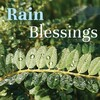 USB card : Rain Blessings by Annie Jameson
